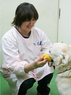 野沢有里子 動物看護士